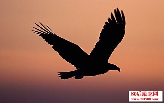 鹰的故事:改变需要勇气