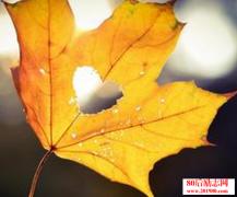 秋风扫落叶,落叶上