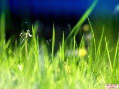 平凡的小草让我们感