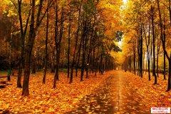 写在QQ签名里关于秋天的散文和句子
