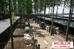 农村养殖业致富项目