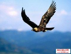 鹰和鸡的故事读后感