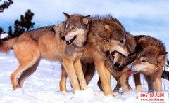 领导力10个狼性法则