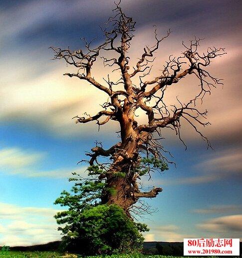 卓越手绘景观树