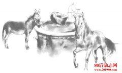驴和马的故事,做吃