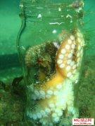 囚禁的章鱼