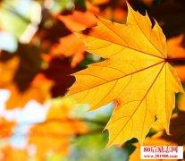 关于秋天的散文,致