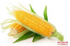 描写玉米的句子、形