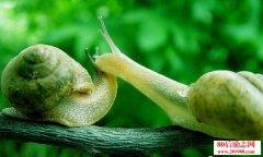 像蜗牛一样背壳爬