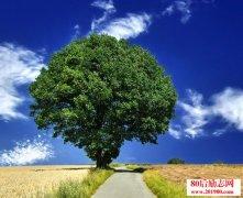 大树成长哲学