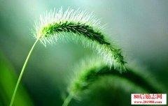 生命的美在于平和