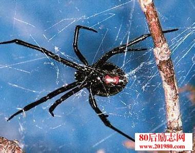 黑蜘蛛故事