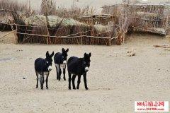 三只驴的不同人生故