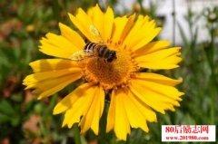 心理寓言故事:蜜蜂