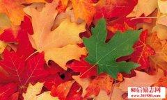 树叶不是一天黄的