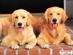 三个卖狗人 给你上