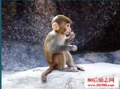 小猴子的故事:你若