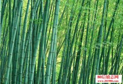 <b>竹子的故事 献给那些坚持了很久却准备放弃的人</b>