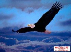 猎人与老鹰的故事,