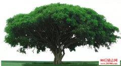 想成为大树 就不要