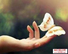 你若盛开,蝴蝶自来