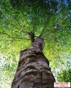 <b>人生如大树,要长成伟岸的躯干,就得勇敢面对春夏秋冬</b>