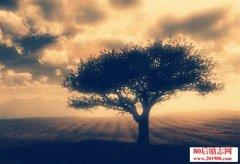 <b>心是一棵树 爱与希望的根须扎在土里</b>