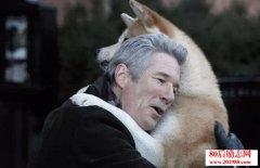 《忠犬八公的故事》