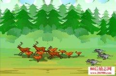 鹿和狼的故事及反思