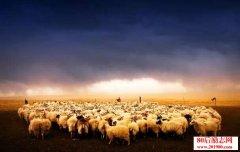 羊群效应实验的启示