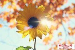 <b>记住,太阳每天都是新的,不要辜负了美好的晨光</b>