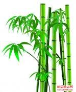 竹子成长过程的励志