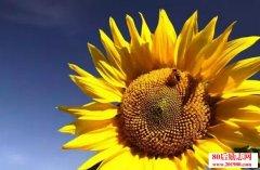 <b>用阳光般的心态迎接魅力人生</b>