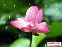 佛说禅语:心如莲花
