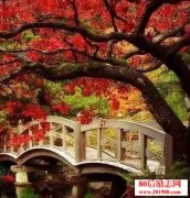 <b>一季静秋,谁在倾听,一叶知秋的美丽?</b>