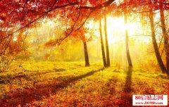 <b>片片枫叶,片片情,这多情的秋啊!</b>