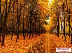 没有你的秋天不美丽