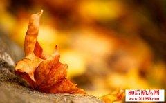 秋已浓,请添衣
