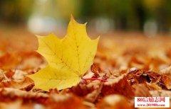 <b>人生有哲理的句子:人心如落叶</b>