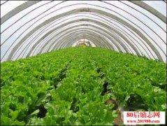 冬季蔬菜种植管理经