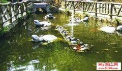 养龟致富经,池塘生