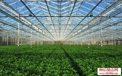 温室大棚种植怎样才