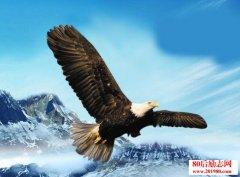 每只菜鸟都有鹰的梦