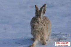 野兔养殖的前景如何