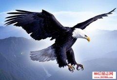 创业犹如鹰的选择,