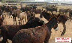 2016年养殖肉驴还能