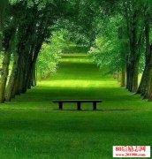<b>安静是一种修养,一种品质和情怀</b>