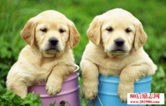 养宠物狗赚钱吗?