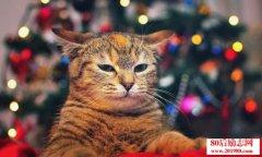 2016年养宠物猫的前景