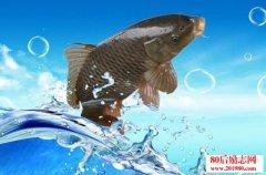 鱼和水的爱情故事